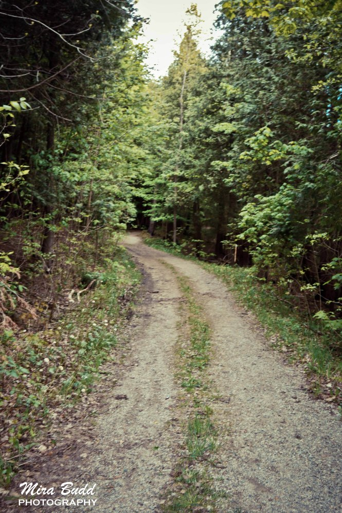 Belfountain Conservation Area, Hiking Trails in Caledon,