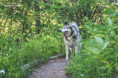 Things to See in Caledon, Places to visit in Ontario, Ontario Attractions, Best Hiking Trails in Ontario, Caledon Badlands,