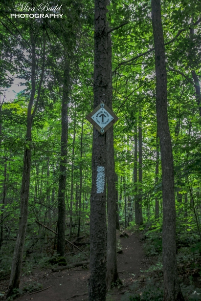The Bruce Trail Hiking, Top Hiking Trails in Ontario, Day Trips Ontario, Things to Visit in Ontario,
