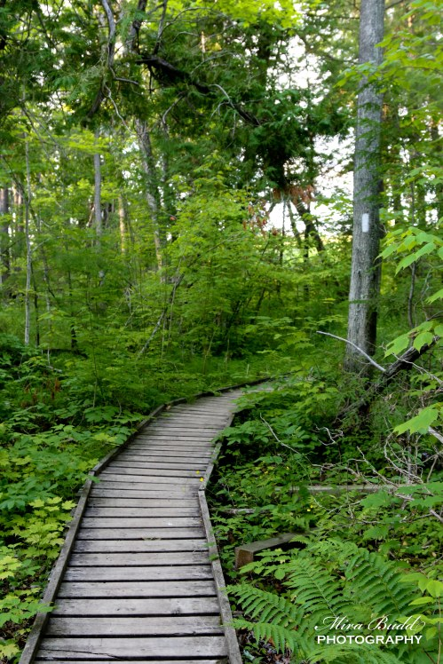 Beautiful Places in Ontario, Day Trips Ontario, Hiking Trails in Ontario, Hiking The Bruce Trail,Ontario Heritage Foundation, Halton Hills Ontario, Things to See in Ontario, Scotsdale Farm, Bennett Side Trail, Bruce Trail Side Trails, Hiking Trail Ontario Maps,