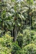 Mount Tamborine, Gold Coast Australia, Tamborine Rainforest Skywalk,