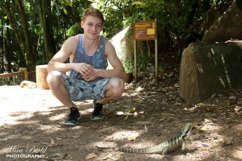 Hiking Trails Queensland, Hiking Trails Australia, Places to visit in Surfers Paradise, Beautiful Places in Queensland, Mount Tamborine, Gold Coast Australia, Curtis Falls Mount Tamborine,