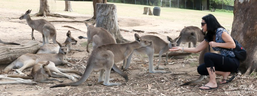 Places to Visit in Australia, Beautiful Places in Australia, Brisbane Zoo, Attractions Brisbane Australia, Where to See Kangaroos in Australia,