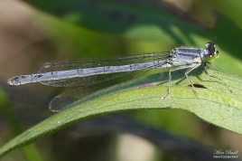 Dragonfly Trail, Caledon East Ontario, Beautiful Places in Ontario, Best Kept Trails, Things to Do in Caledon,