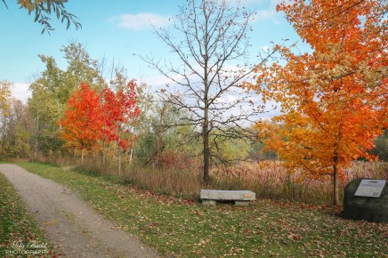 """Our Bench Has Been Installed on The Trans Canada Trail """"The GreatTrail"""""""