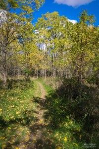 Niagara Falls Hiking, Trans Canada Trail, Hiking Trails Ontario, Niagara River, Beautiful Places in Ontario, Ontario Hiking Trails,