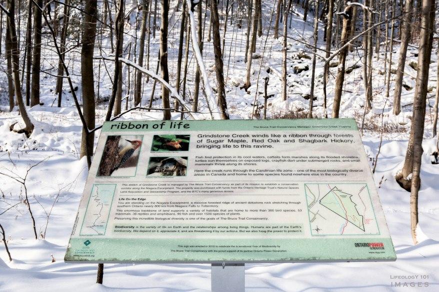 Ontario Hiking Trails, Bruce Trail, Smokey Hallow, Great Falls, Waterdown Ontario, Smokey Hallow,
