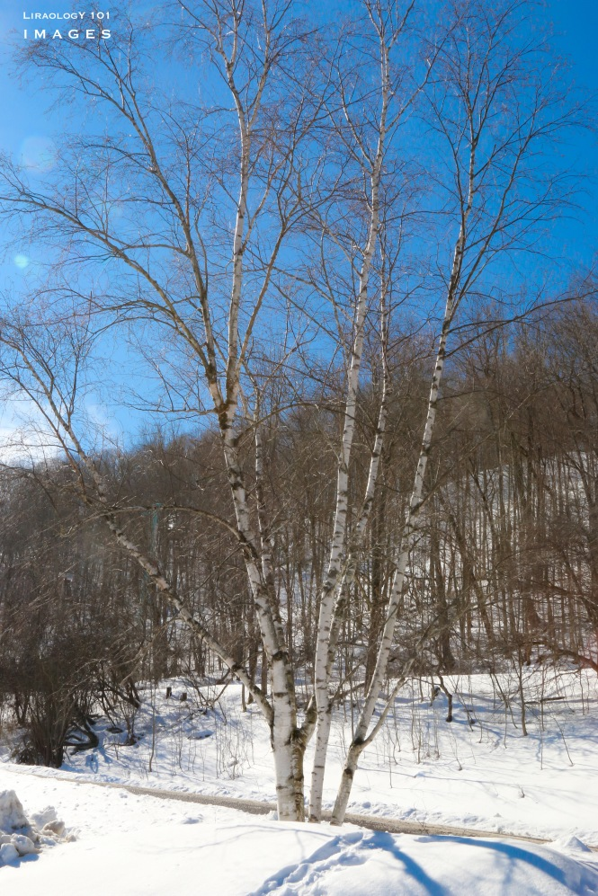 Holiday Valley - Ellicottville New York
