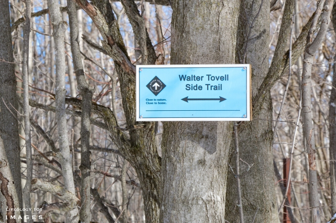 Hiking Trails Ontario, Things to do in Ontario, Winter events Caledon, Mono Cliffs Provincial Park, Bruce Trail Hiking,