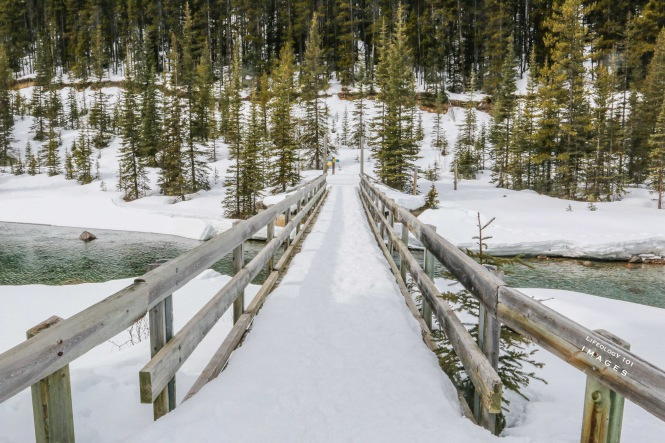 Hiking Trails Lake Louise, Things to Do in Lake Louise, Banff Alberta, Hiking Alberta,