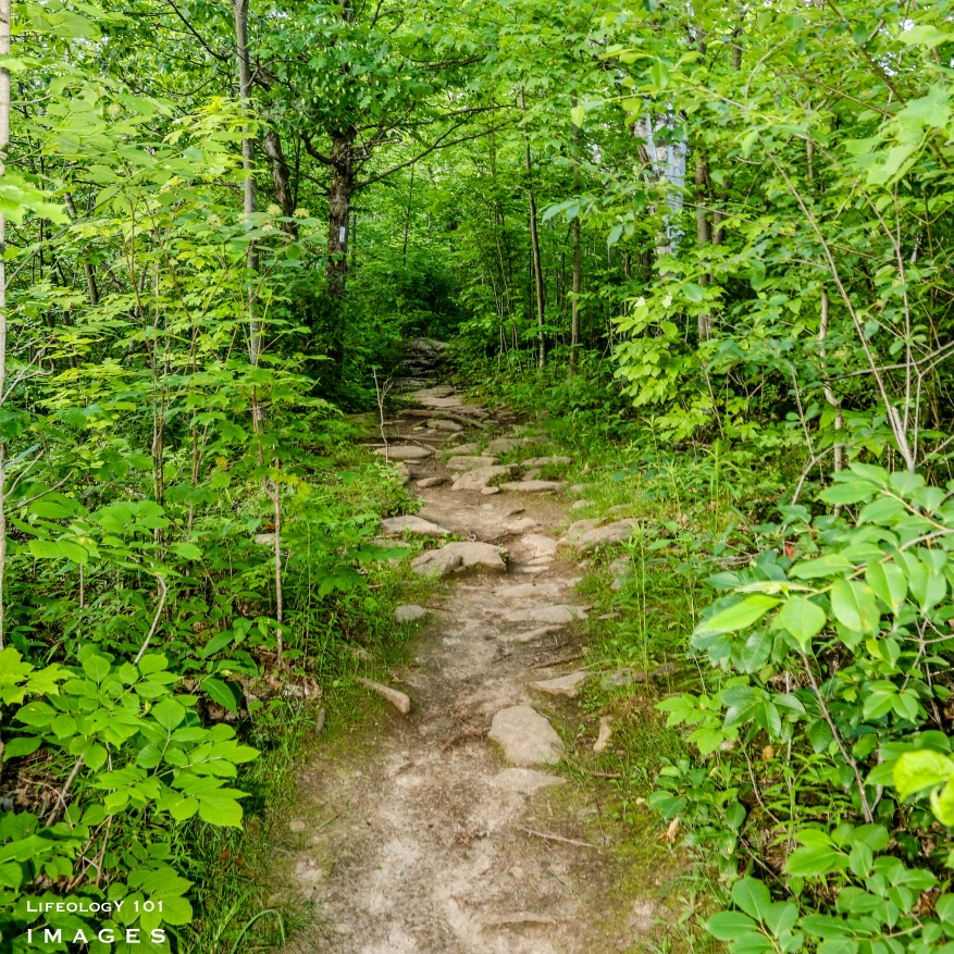 Hiking Trails Ontario, Hiking Ontario, Bruce trail Hiking, Best Hiking Trails in Ontario,