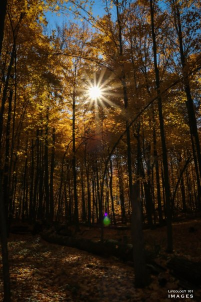 Fall Hikes Ontario, Beautiful fall Hikes, Trans Canada Trail Hiking, The Bruce Trail,