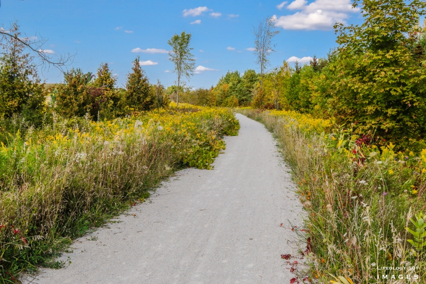 The Great Trail, Beeton Ontario, Cookstown Ontario, Cycling Trails Ontario, Beautiful Biking Trails Ontario, Hiking Trails Ontario,
