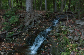 Ontario, Hiking, Trails, Bruce, Trail, Silver Creek,