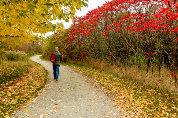 City Hiking, Places to Visit in Toronto, Things to See in Ontario, Hiking Trails Ontario, The Great Trail,