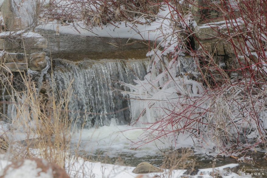 Waterfalls in Guelph, Ontario Waterfalls, Things to See in Guelph Ontario,