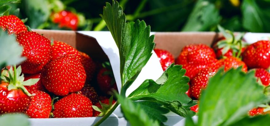 bigstock-fresh-strawberries-appetizing-234076201.jpg